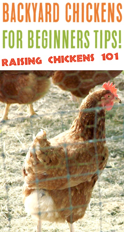 Backyard Chickens for Beginners DIY Ideas and Tips