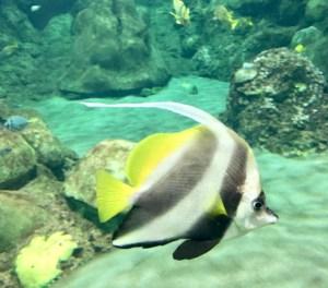 New York Aquarium Military Discount