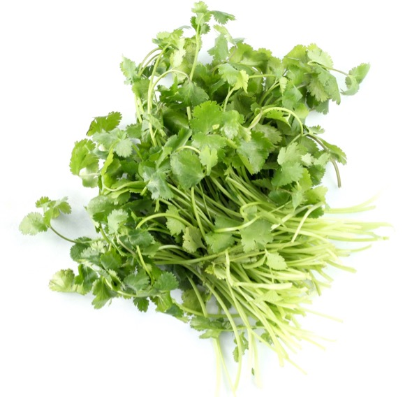 How to Dry Cilantro Leaves