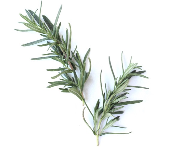 How to Grow Rosemary from Cuttings in Water