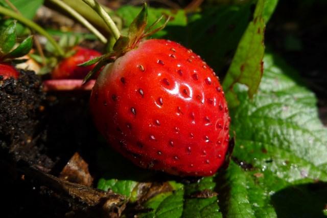 April Strawberry