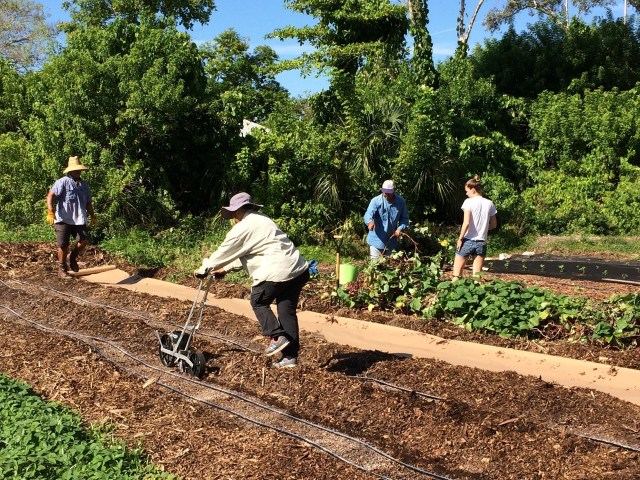 Our Garden is Growing — Shares Reservations for 2018-2019