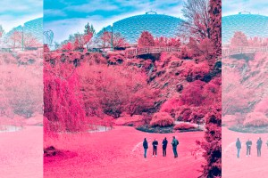 ARTS_Zolas-ALbum-Review_Light-Organ-Records