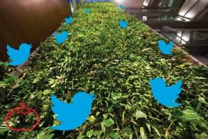 WEB_Opinions_TOM_Living_Wall_twitter_cred_JMSadik