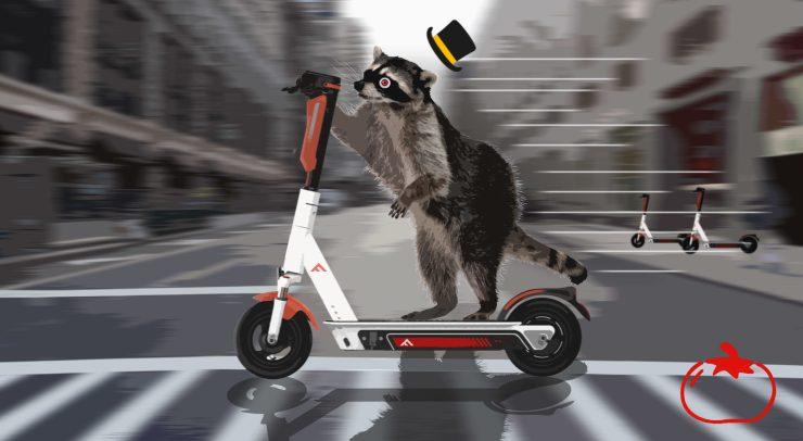 Raccoon riding a scooter