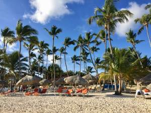 Palm trees, blue sky, and beach chairs