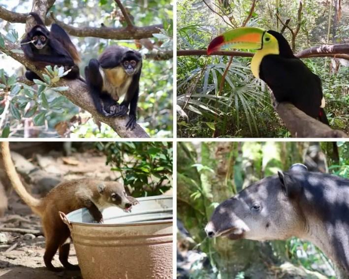 Zoo Animal Collage