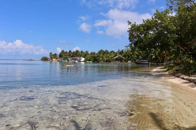 Water and palm trees at South Water Caye