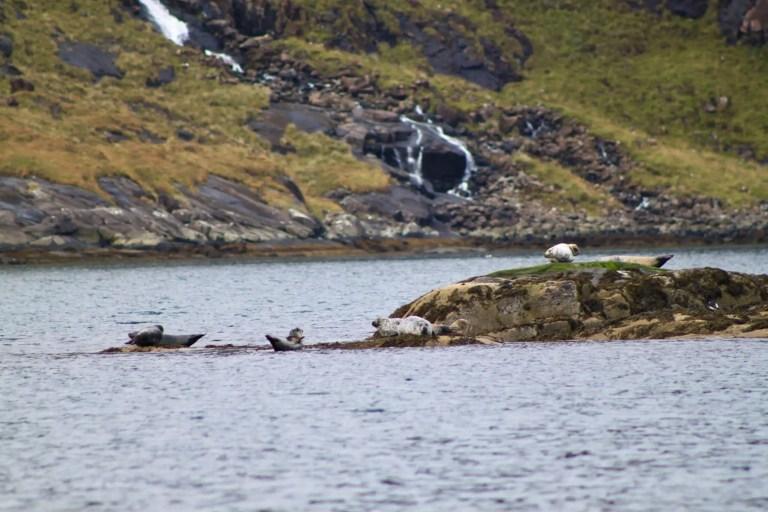Seals sunning themselves on rocks