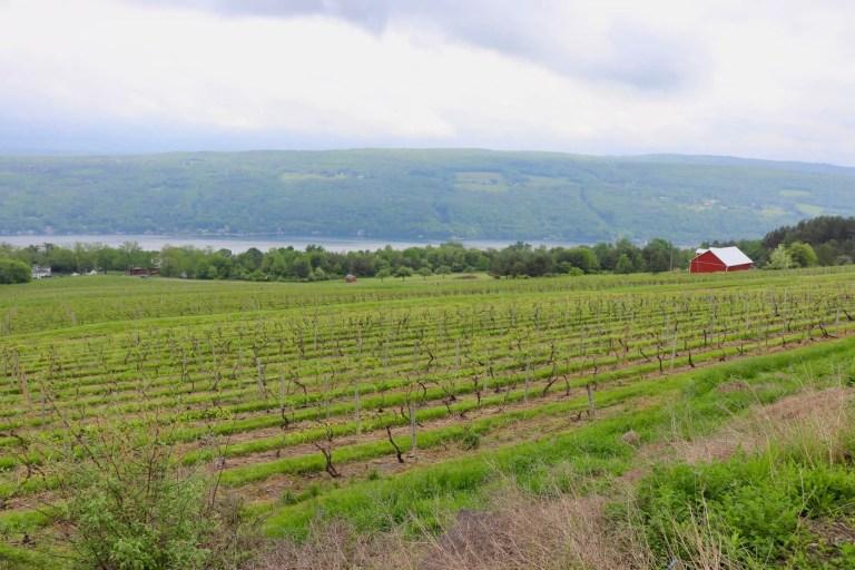 view of vineyard, barn, and lake