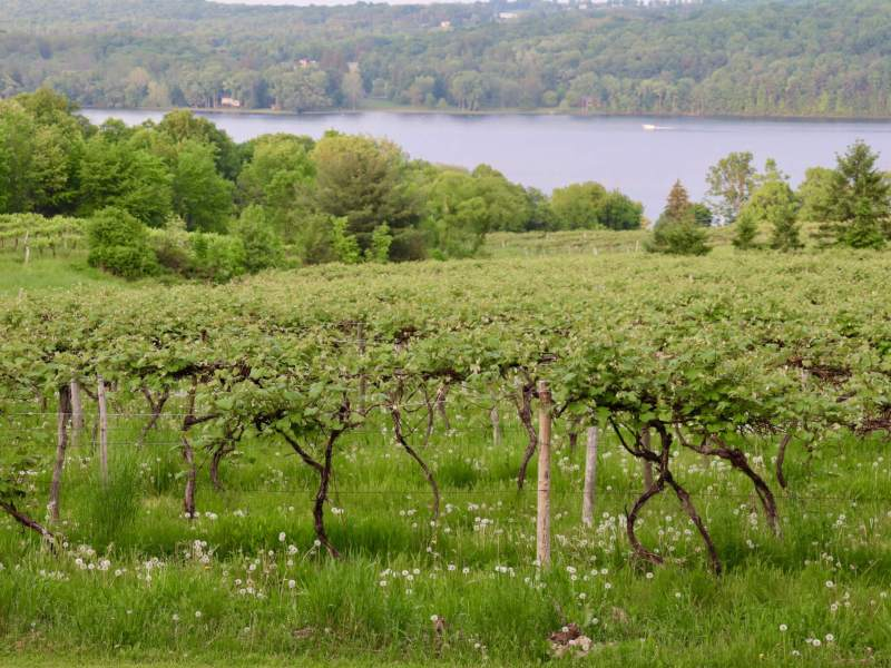 vineyard and lake