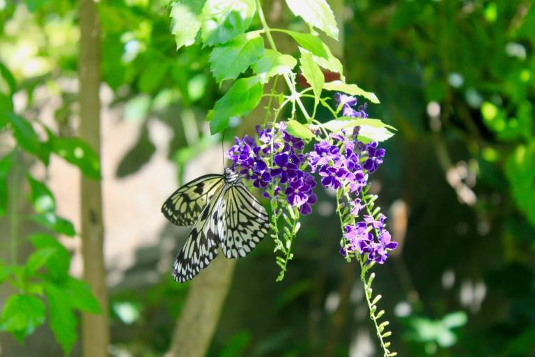 Butterfly on flower at Omaha Zoo