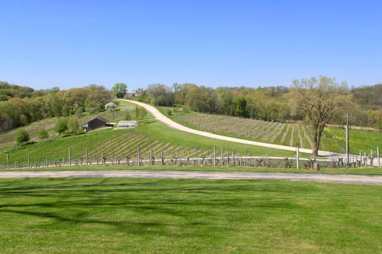 Vineyard at Park Farm Winery