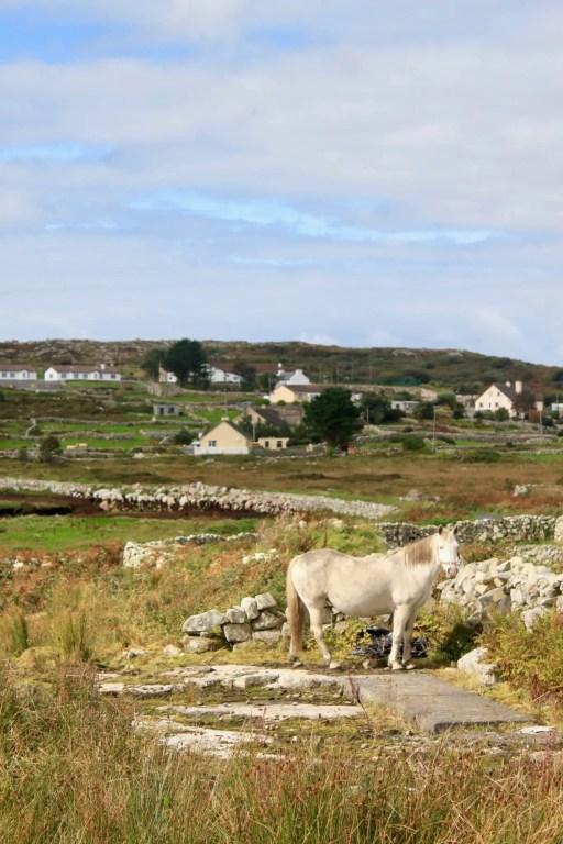 Horse in pastoral setting on Connemara Peninsula