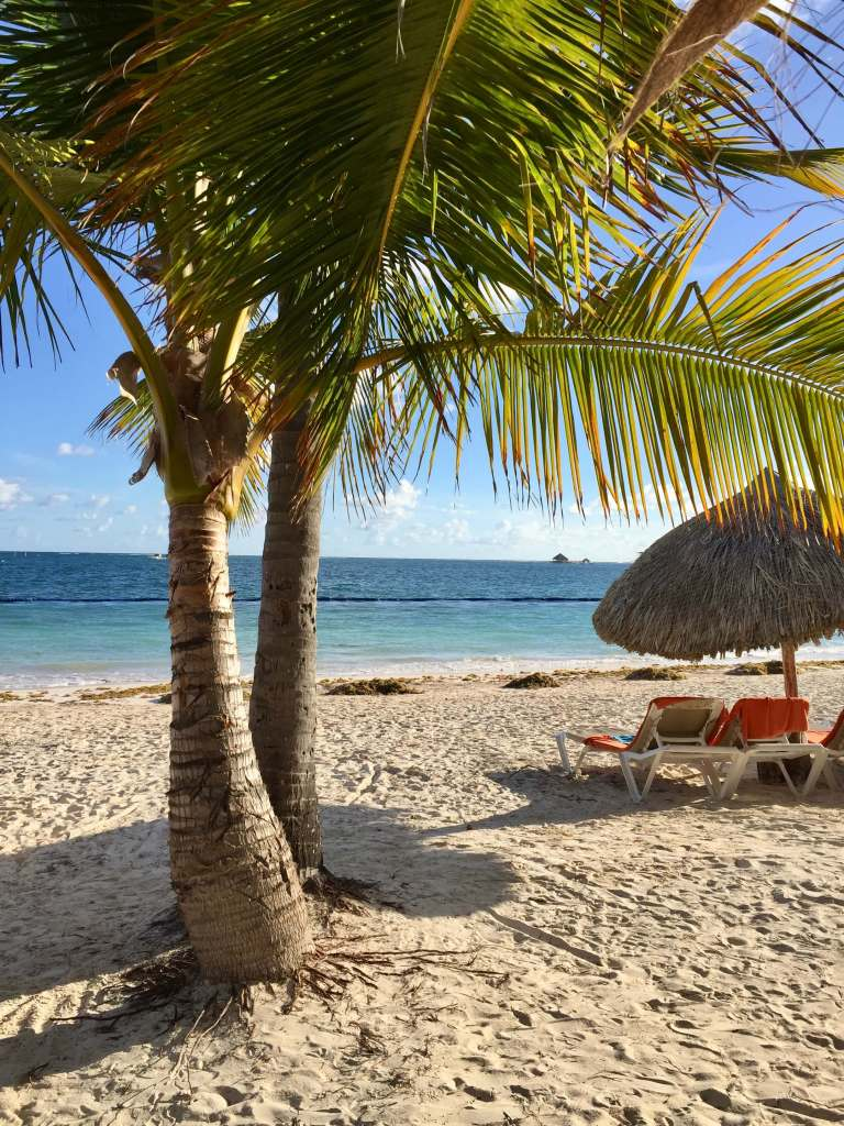 Palm trees and beach chairs on the sand at an all-inclusive resort.