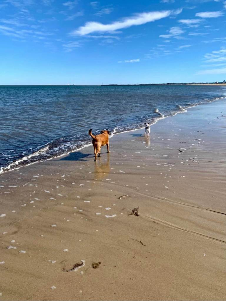 Two dogs on the beach in winter