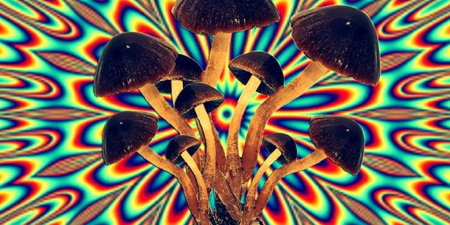 Shrooms that grow in alberta, Buy Shrooms in Alberta – Edmonton & Calgary, The Fun Guys