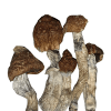 8 Strains Magic Mushroom Party Pack
