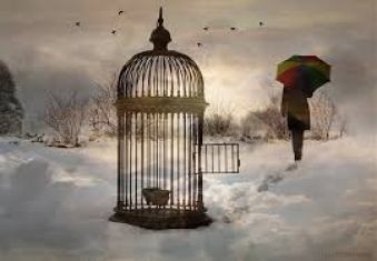 Open the cage on your limiting beliefs