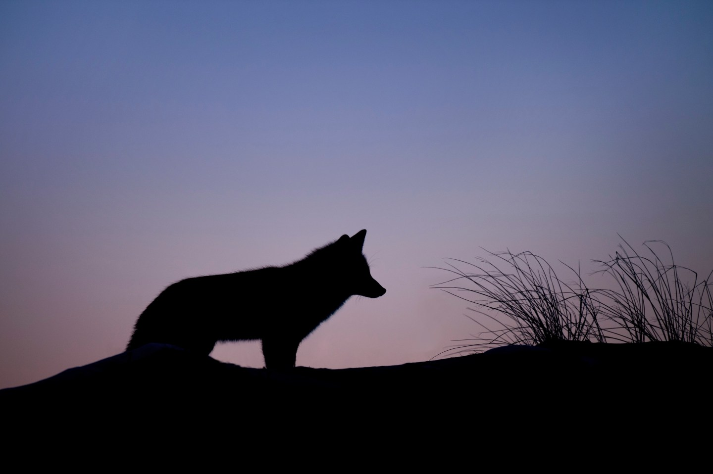 What the Yellowstone wolves can teach us about building a culture of innovation