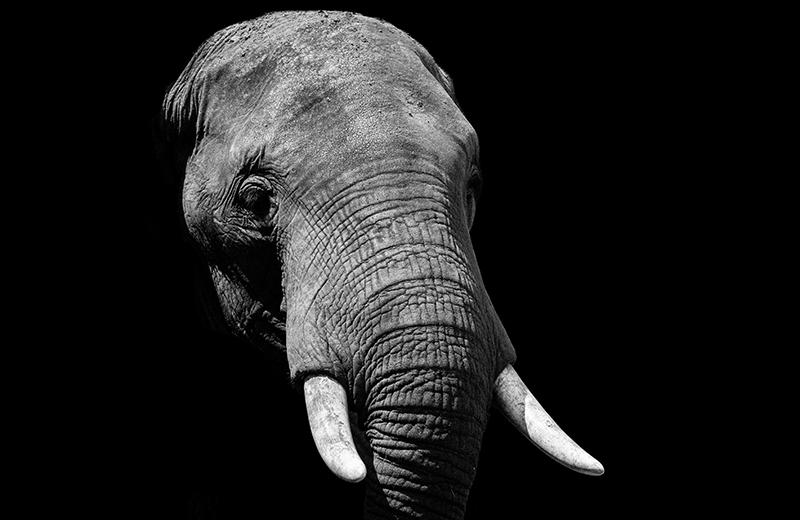 How do you eat the digital transformation elephant?