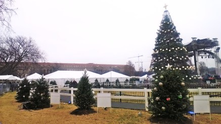 The National Christmas Tree with surrounding state trees