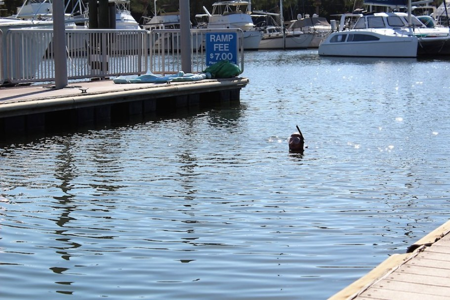 A diver's head posing out of the water at a marina.