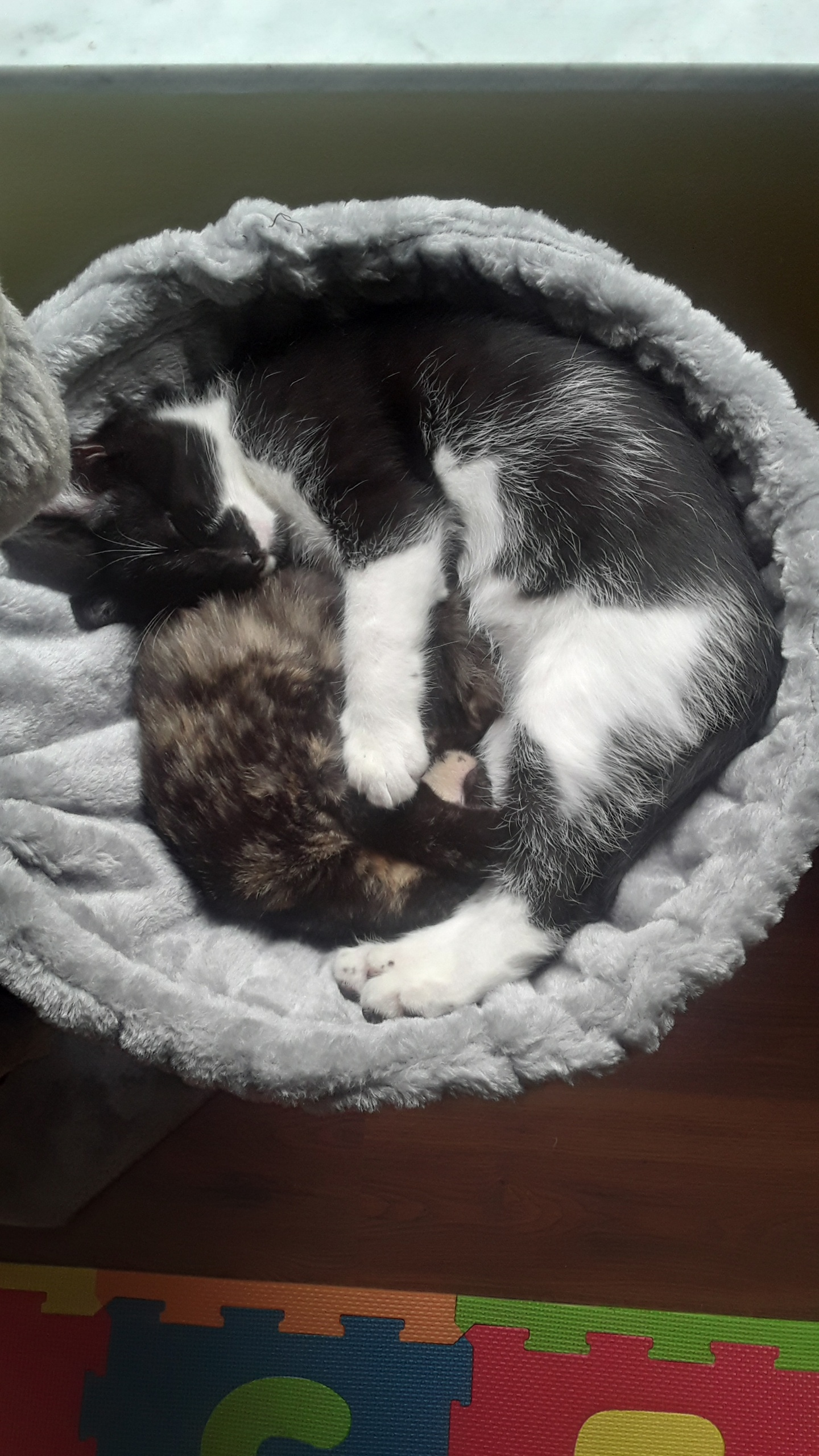 Two cats snuggled in a bed.