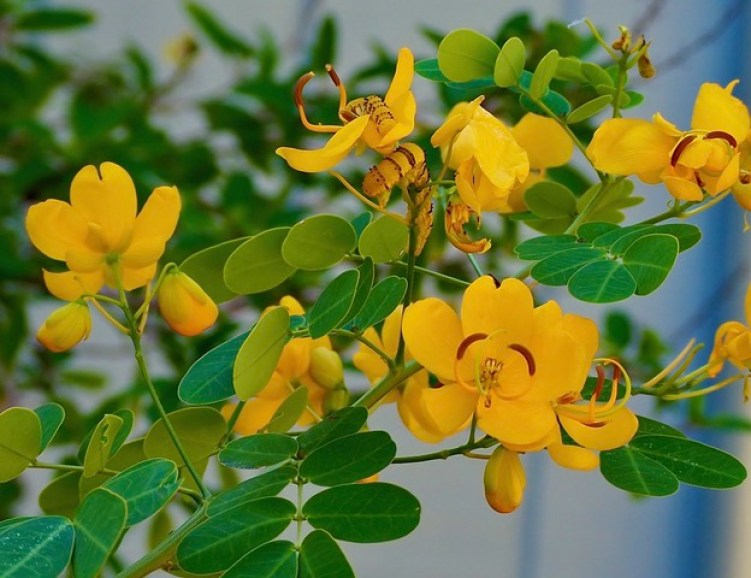 A yellow flowering plant