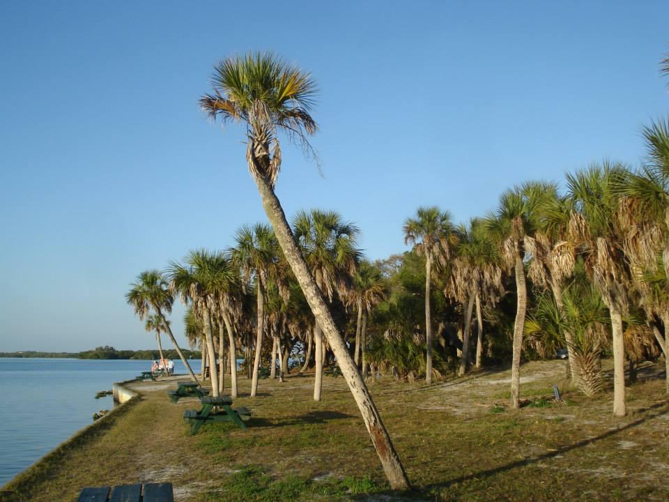 Palm trees on a coastline with a clear blue sky