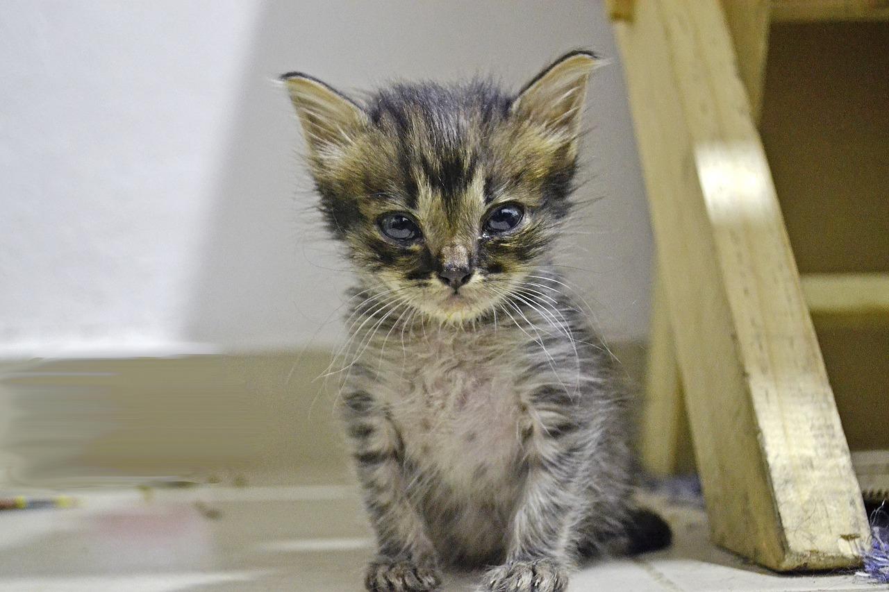 Kitten sitting