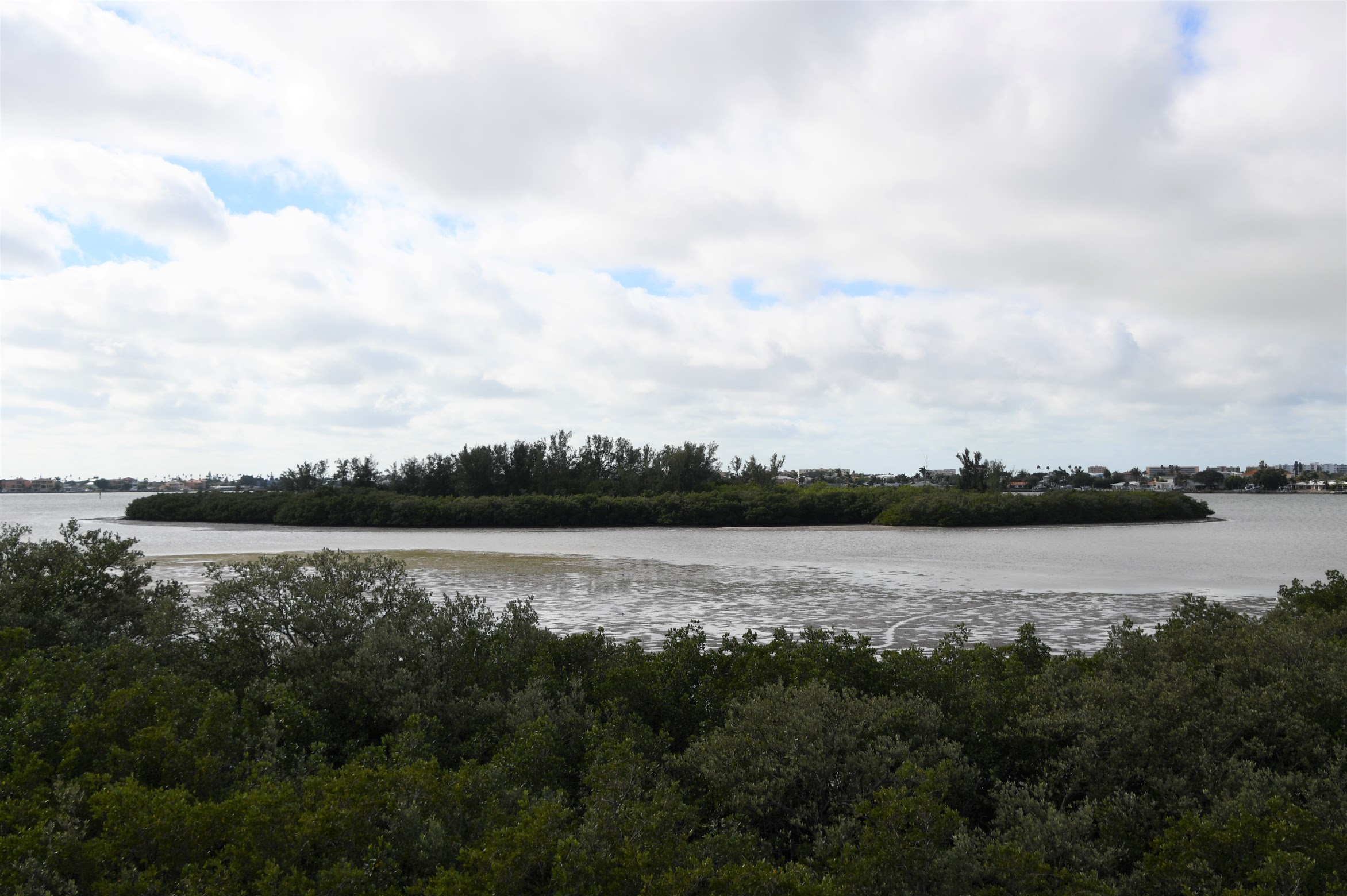 A small mangrove island just off the coast in a bay
