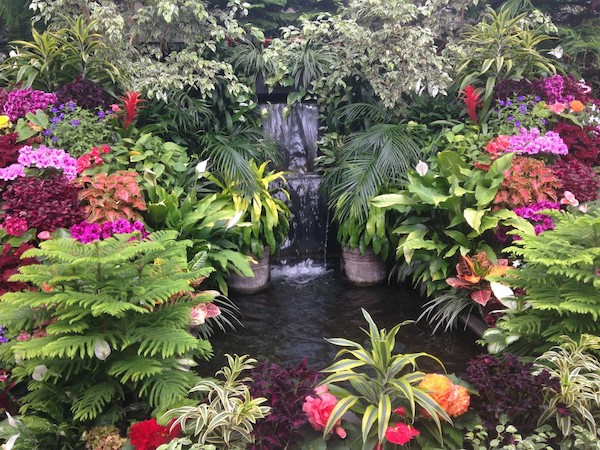 Colorful Flora and Fauna in a manmade decorative pool.