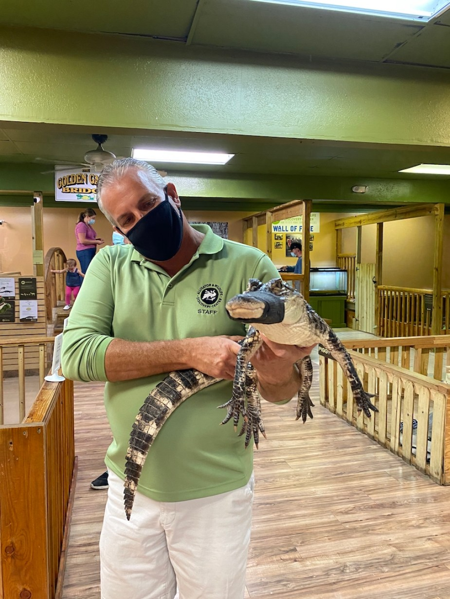 A man in a green shirt and black face mask holds a small alligator with tape over its mouth
