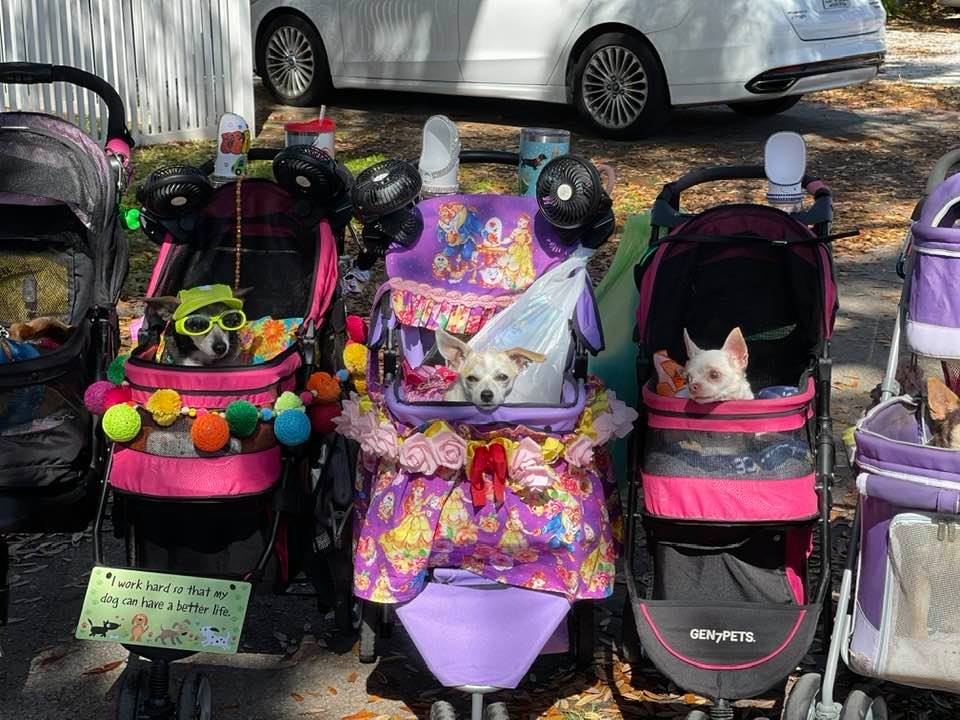 Three small dogs in multicolored baby strollers