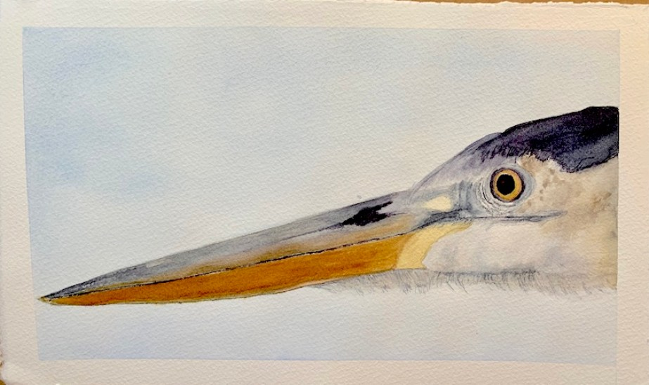 A watercolor of the head and beak of a heron