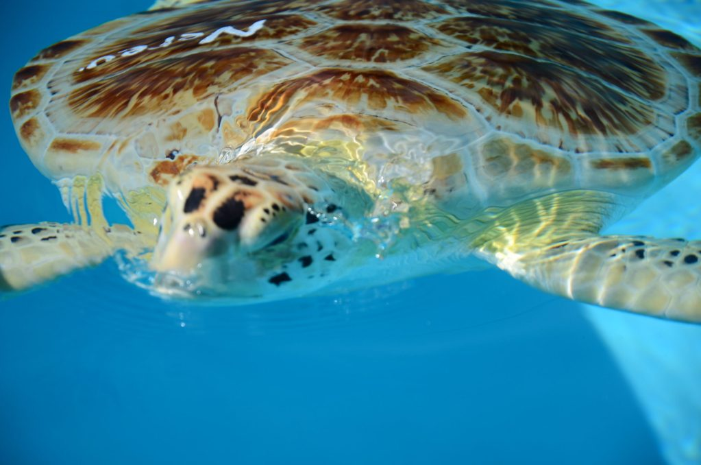 turtle in a pool of water