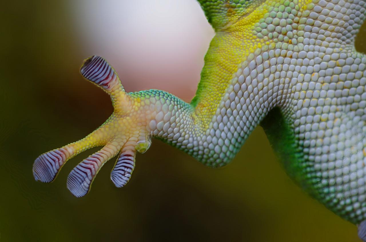A close up photo of a lizard hand.