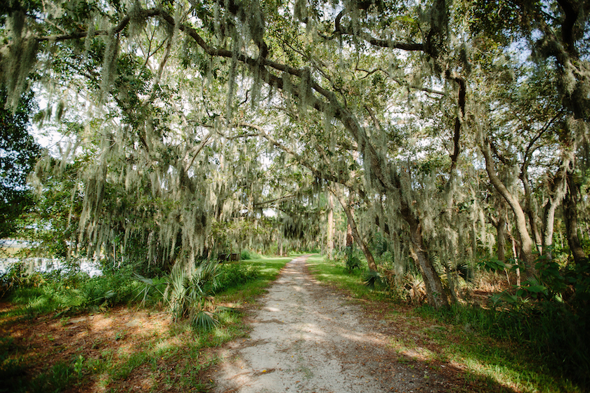 An outdoor photo of a trail passing through a canopy of trees and Spanish moss.
