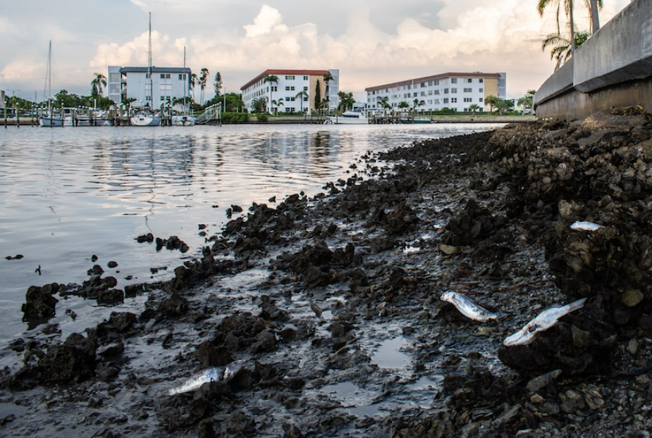 A photo of a muddy water bank with dead fish with buildings in the background at sunset.