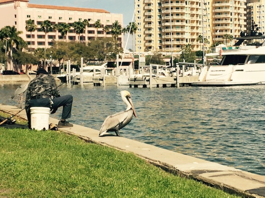 A photo of a pelican on a seawall next to a fisherman by a marina with buildings and water in the background.
