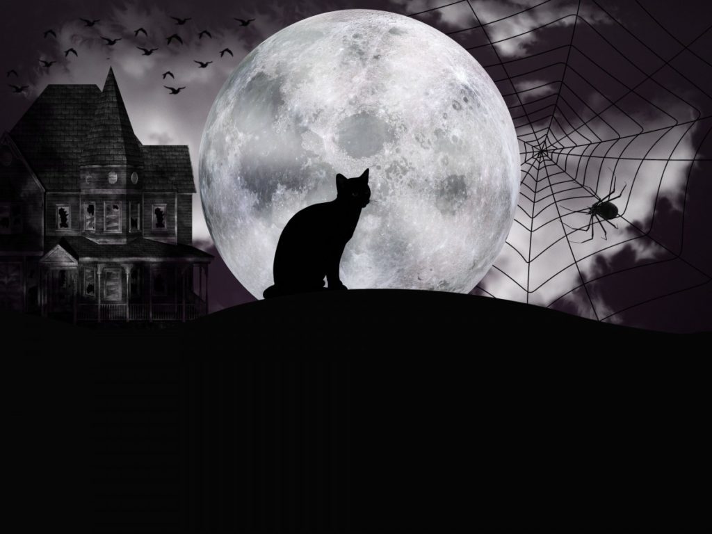 The silhouette of a black cat against a moon