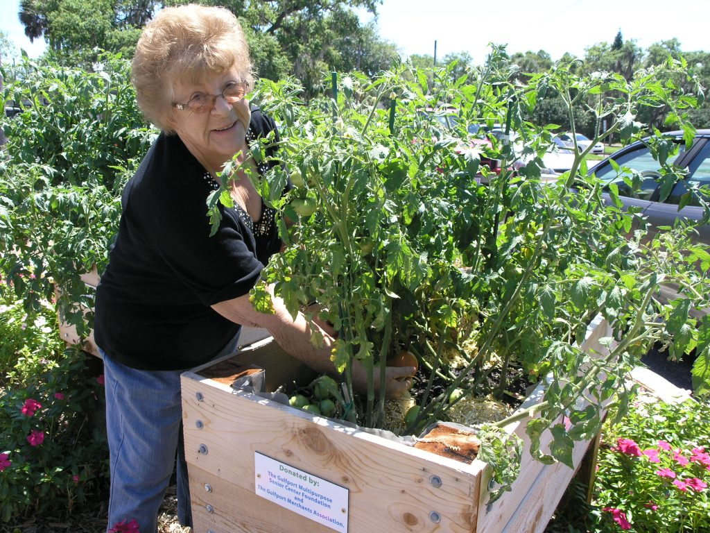 Elsa Menis of South Pasadena shows off the first red tomato of the season at the Gulfport Senior Center on Friday, April 8.