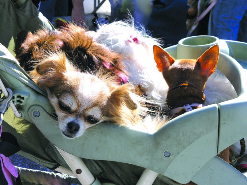 A carriage of furry puppies