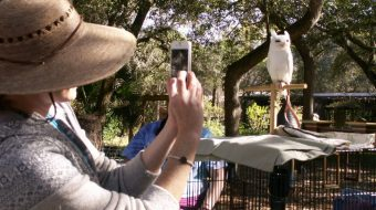 Woman photographs a black and white bird of prey sitting on a perch.