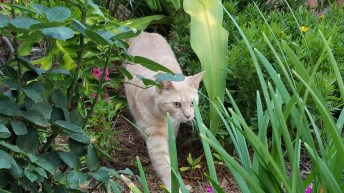 Palm Harbor Cat