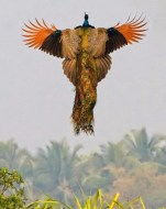 Mind-Blowing Animal Pictures 6