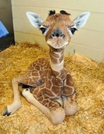 Mind-Blowing Animal Pictures 9