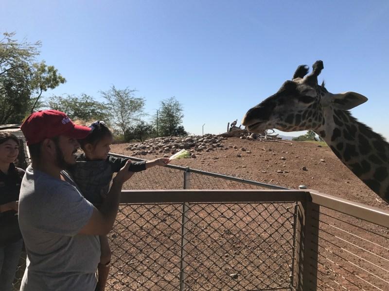 Family Zoo Day at the Phoenix Zoo - feeding the giraffes