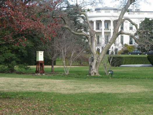 I got to see the famous bee hive on the White House grounds